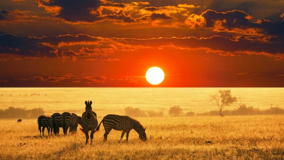 south-africa-safari-sunset